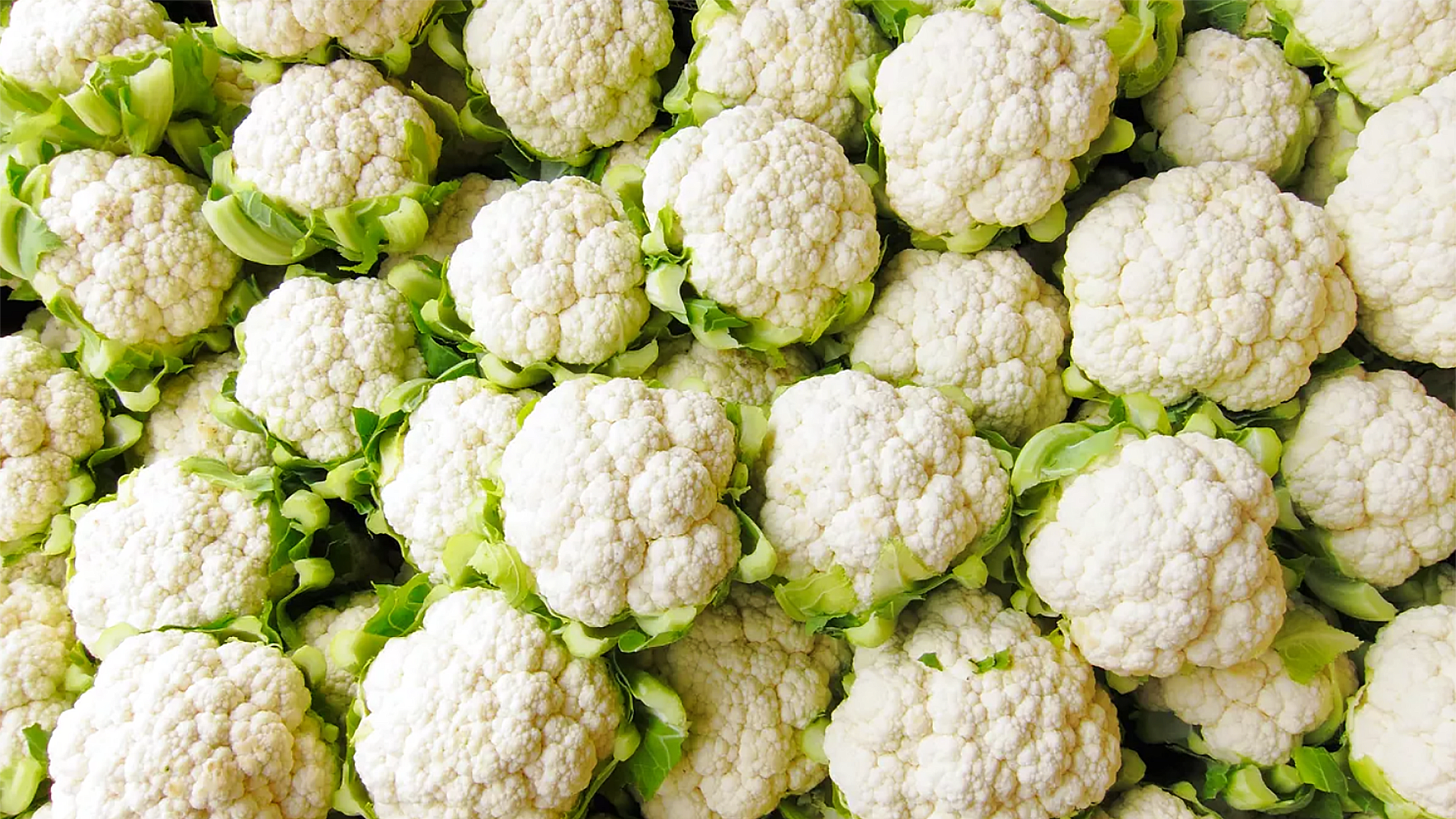 Fresh Cauliflower Bunches