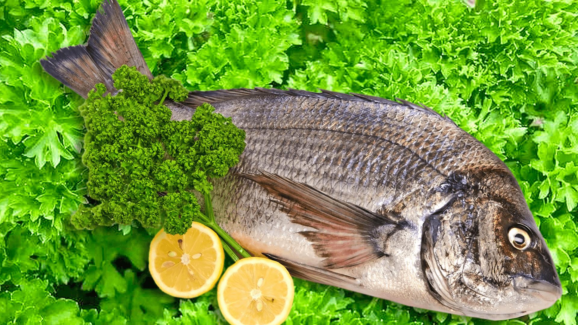 Fresh Seabream